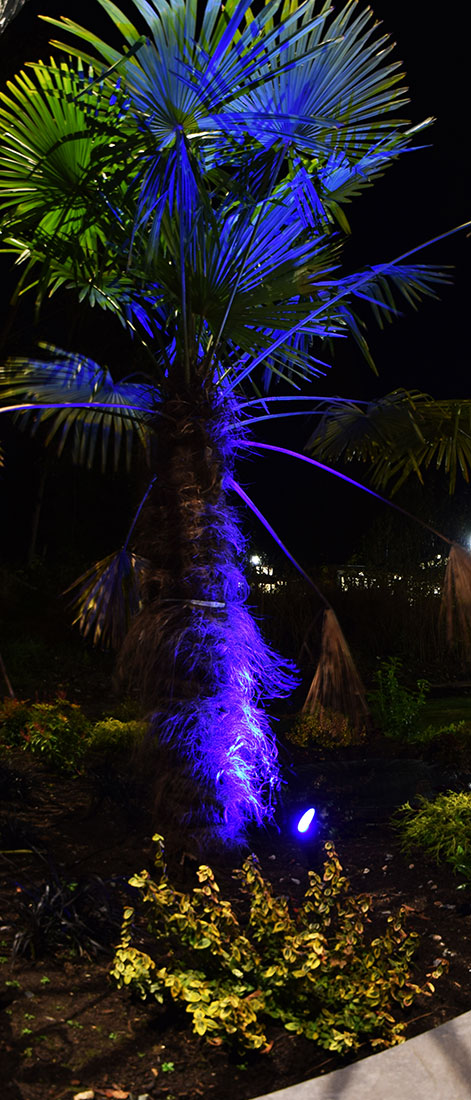 Landscape Lighting Installation and Design in Surrey, Langley, White Rock and Vancouver area
